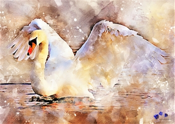 High quality art print - Swan