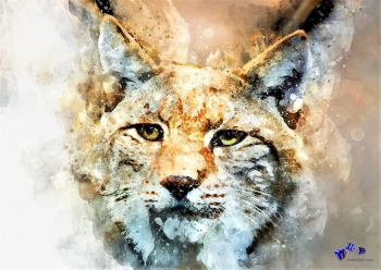 High quality art print - Wild cat