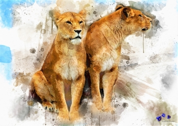 High quality art print - Lions